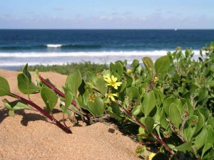 b2-on-dune-ocean-backgroud_HC